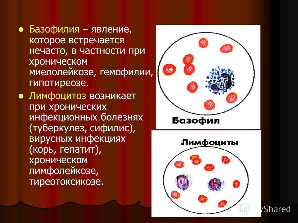 Базофилия – явление, которое встречается нечасто, в частности при хроническом миелолейкозе, гемофилии, гипотиреозе. Лимфоцитоз возникает при хронических инфекционных болезнях (туберкулез, сифилис), вирусных инфекциях (корь, гепатит), хроническом лимф