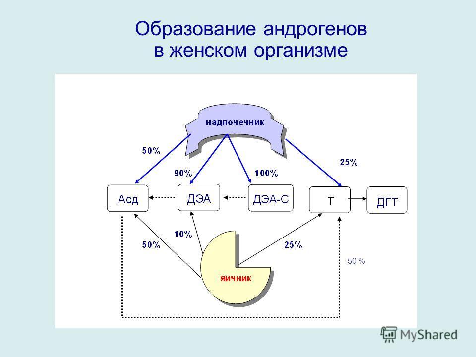 Образование андрогенов в женском организме 50 %