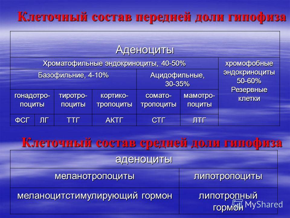 Клеточный состав передней доли гипофиза Аденоциты Хроматофильные эндокриноциты, 40-50% хромофобные эндокриноциты 50-60% Резервные клетки Базофильние, 4-10% Ацидофильные,30-35% гонадотро- поциты тиротро- поциты кортико- тропоциты сомато- тропоциты мам