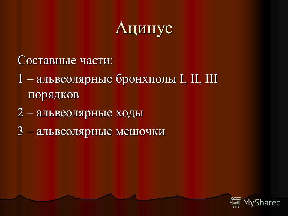 Ацинус Составные части: 1 – альвеолярные бронхиолы І, ІІ, ІІІ порядков 2 – альвеолярные ходы 3 – альвеолярные мешочки
