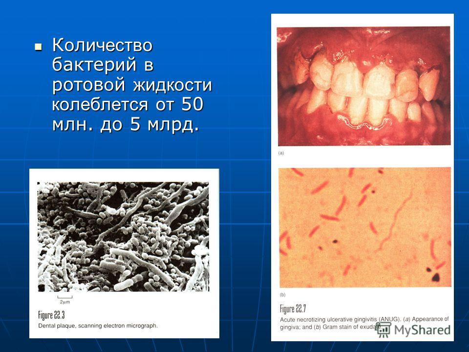 К о л ичество бактер и й в ротов о й жидкости колеблется от 50 млн. до 5 млрд. К о л ичество бактер и й в ротов о й жидкости колеблется от 50 млн. до 5 млрд.