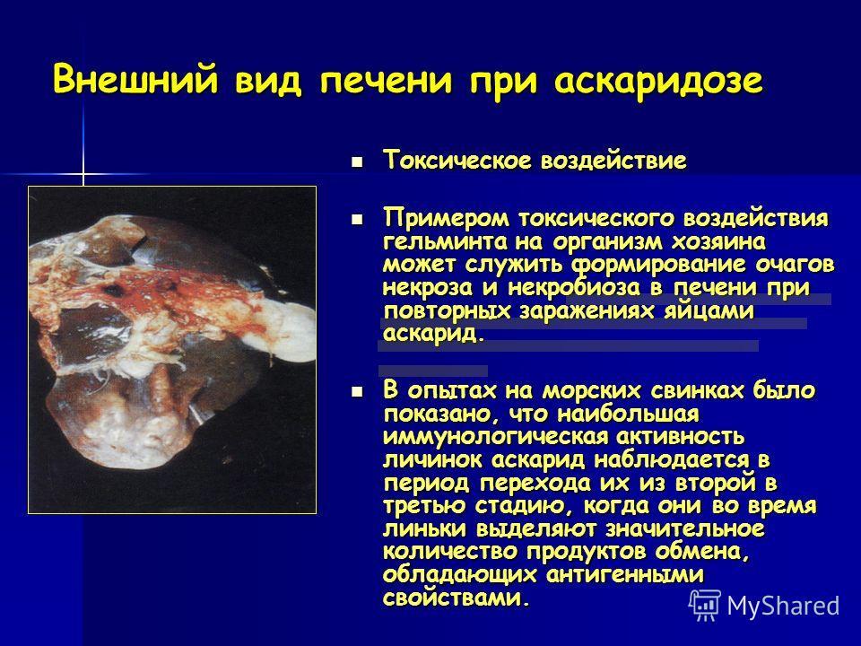 Внешний вид печени при аскаридозе Токсическое воздействие Токсическое воздействие Примером токсического воздействия гельминта на организм хозяина может служить формирование очагов некроза и некробиоза в печени при повторных заражениях яйцами аскарид.
