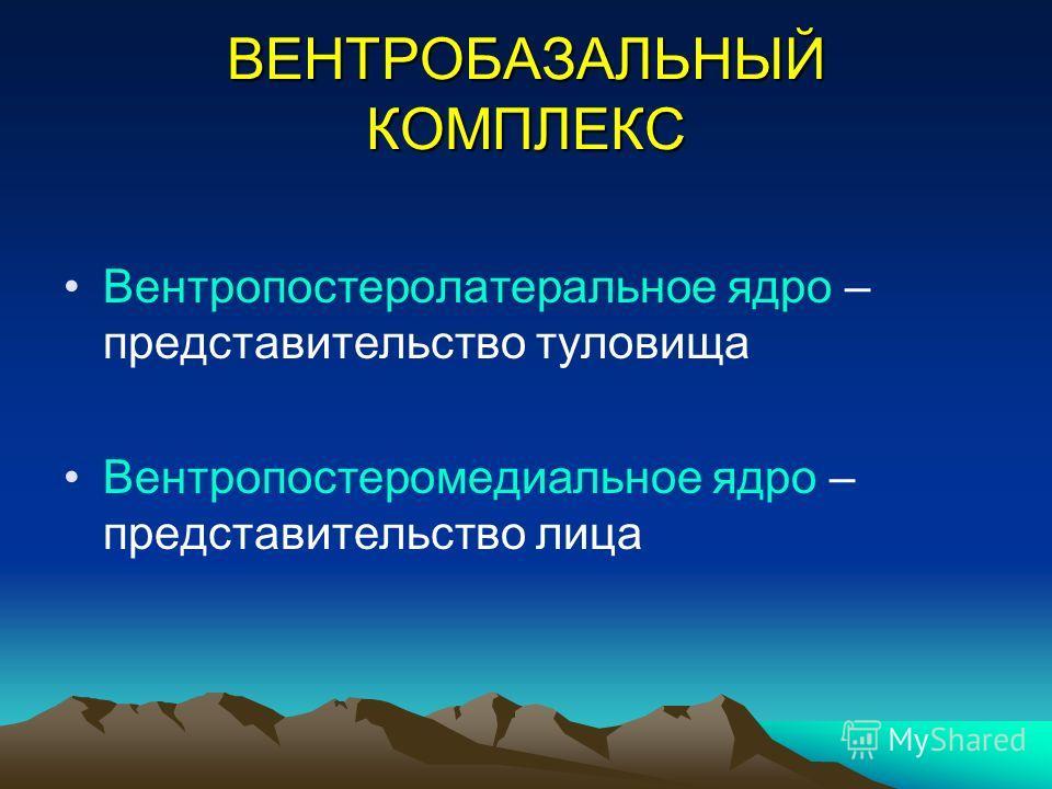ВЕНТРОБАЗАЛЬНЫЙ КОМПЛЕКС Вентропостеролатеральное ядро – представительство туловища Вентропостеромедиальное ядро – представительство лица