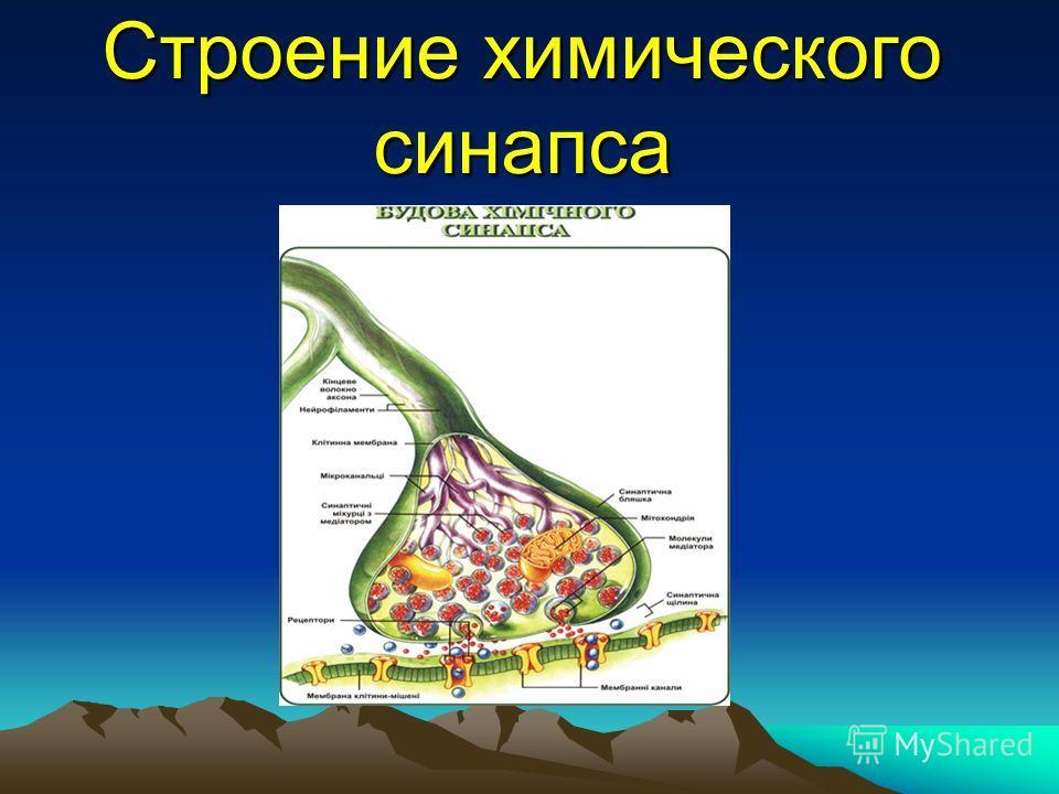 Строение химического синапса