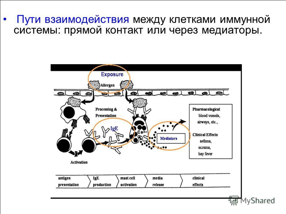 Пути взаимодействия между клетками иммунной системы: прямой контакт или через медиаторы.