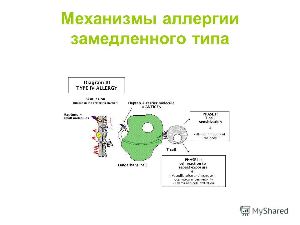 Механизмы аллергии замедленного типа