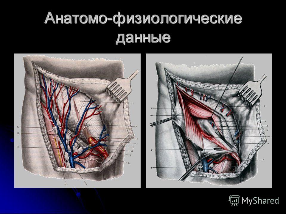Анатомо-физиологические данные