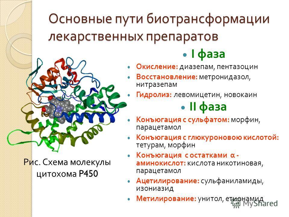 Основные пути биотрансформации лекарственных препаратов І фаза Окисление : диазепам, пентазоцин Восстановление : метронидазол, нитразепам Гидролиз : левомицетин, новокаин II фаза Конъюгация с сульфатом : морфин, парацетамол Конъюгация с глюкуроновою