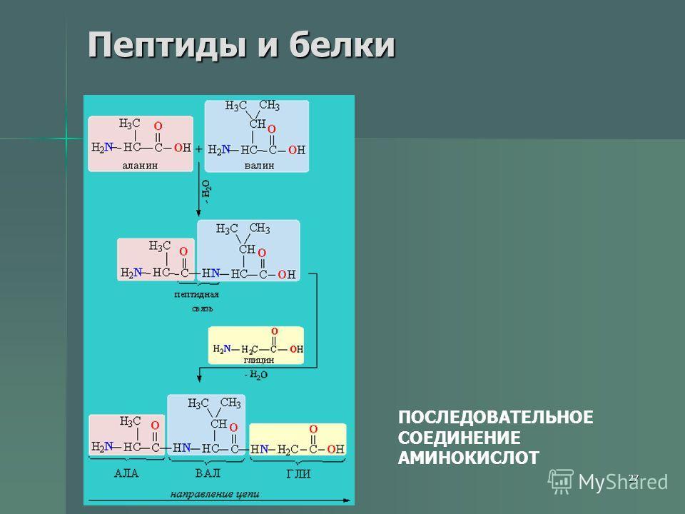27 Пептиды и белки ПОСЛЕДОВАТЕЛЬНОЕ СОЕДИНЕНИЕ АМИНОКИСЛОТ