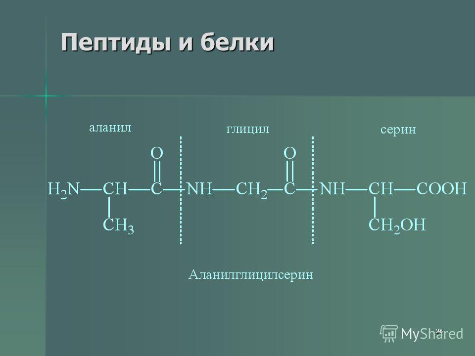 28 Пептиды и белки