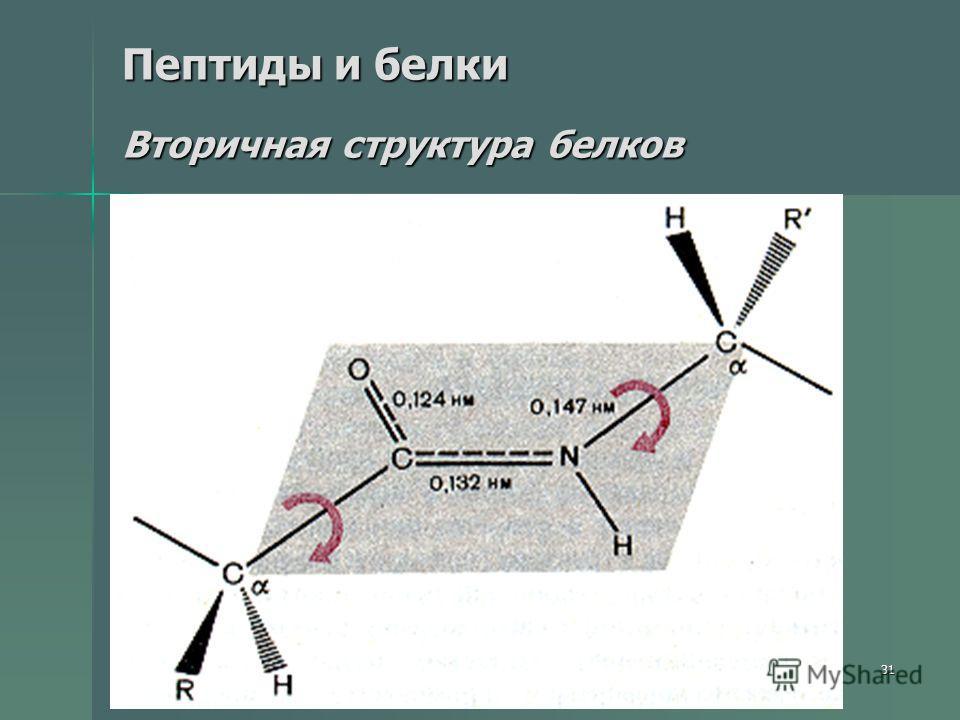 31 Пептиды и белки Вторичная структура белков
