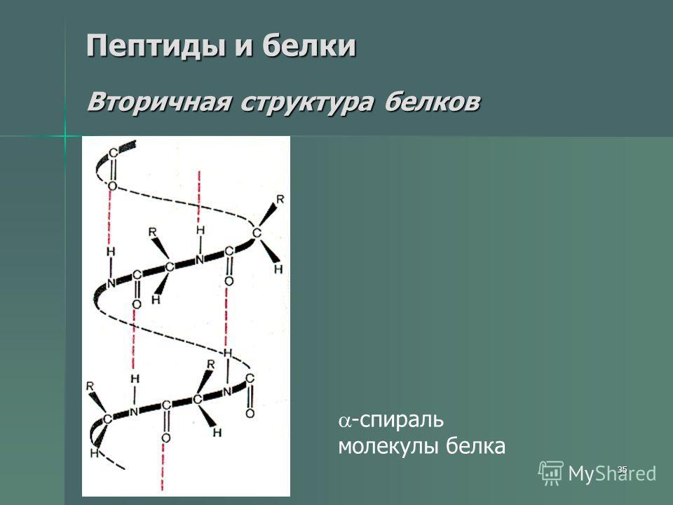 35 Пептиды и белки Вторичная структура белков -спираль молекулы белка