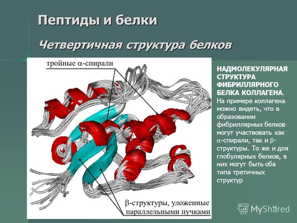 48 Пептиды и белки Четвертичная структура белков НАДМОЛЕКУЛЯРНАЯ СТРУКТУРА ФИБРИЛЛЯРНОГО БЕЛКА КОЛЛАГЕНА. На примере коллагена можно видеть, что в образовании фибриллярных белков могут участвовать как -спирали, так и - структуры. То же и для глобуляр