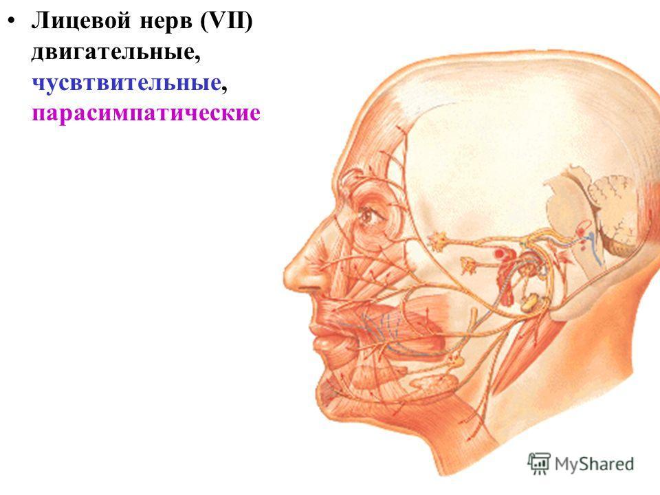 Лицевой нерв (VII) двигательные, чусвтвительные, парасимпатические