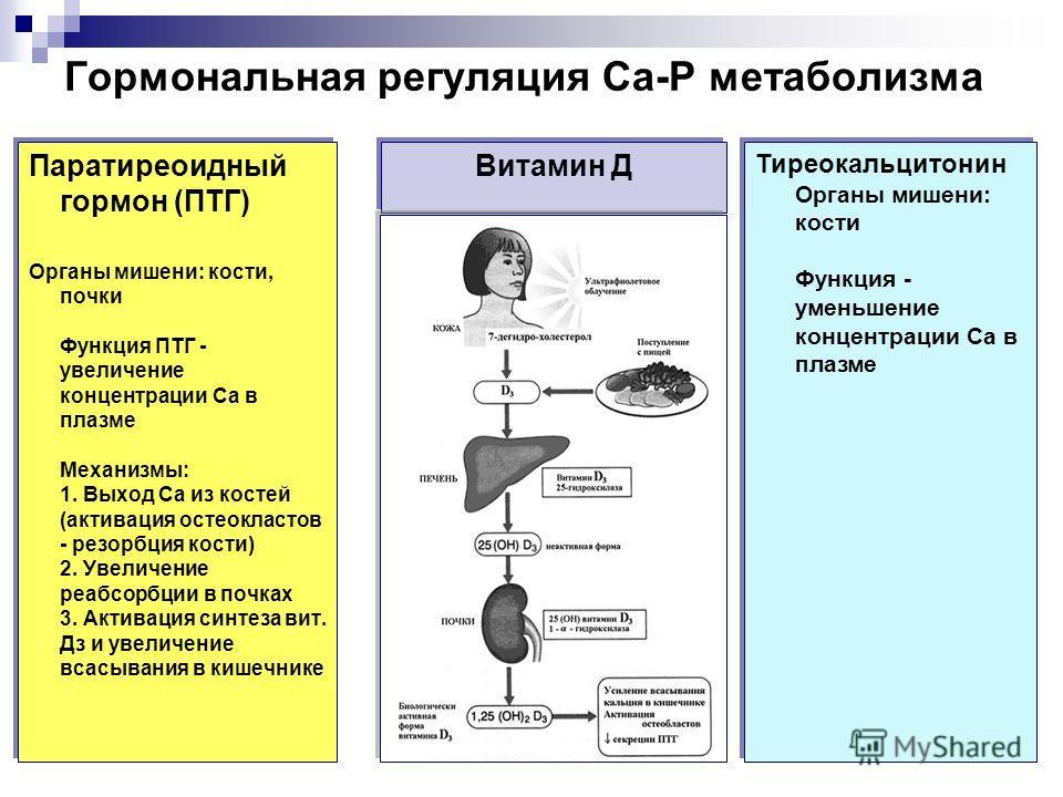 Паратиреоидный гормон (ПТГ) Органы мишени: кости, почки Функция ПТГ - увеличение концентрации Са в плазме Механизмы: 1. Выход Са из костей (активация остеокластов - резорбция кости) 2. Увеличение реабсорбции в почках 3. Активация синтеза вит. Дз и ув