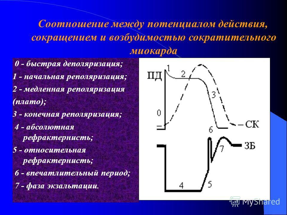 0 - быстрая деполяризация; 1 - начальная реполяризация; 2 - медленная реполяризация (плато); 3 - конечная реполяризация; 4 - абсолютная рефрактернисть; 5 - относительная рефрактернисть; 6 - впечатлительный период; 7 - фаза экзальтации. Соотношение ме