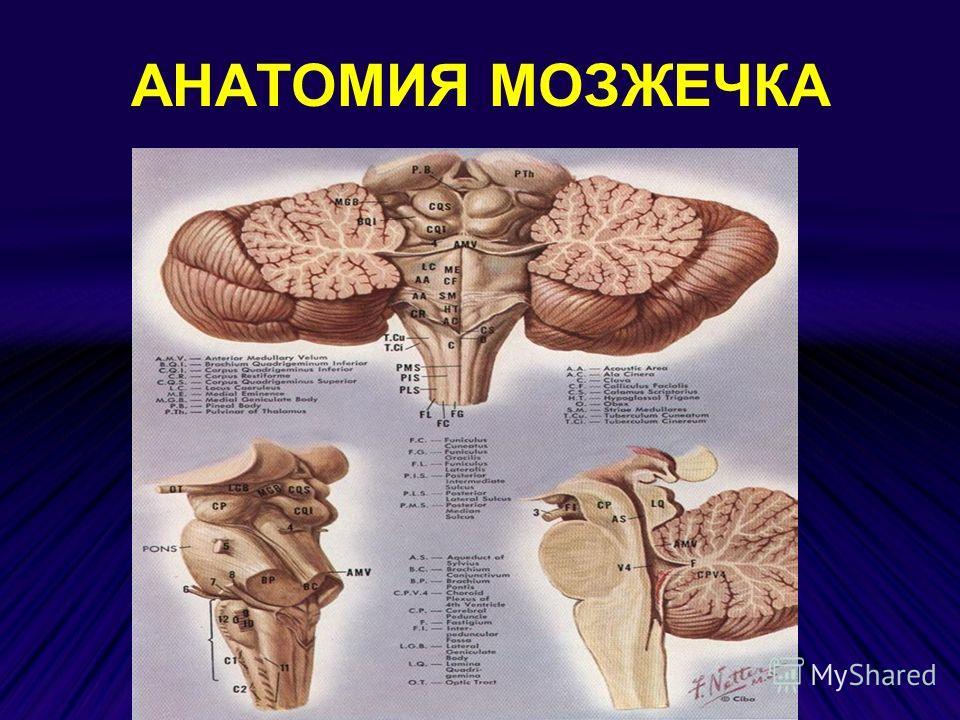 Полиоэнцефаломиелит фото