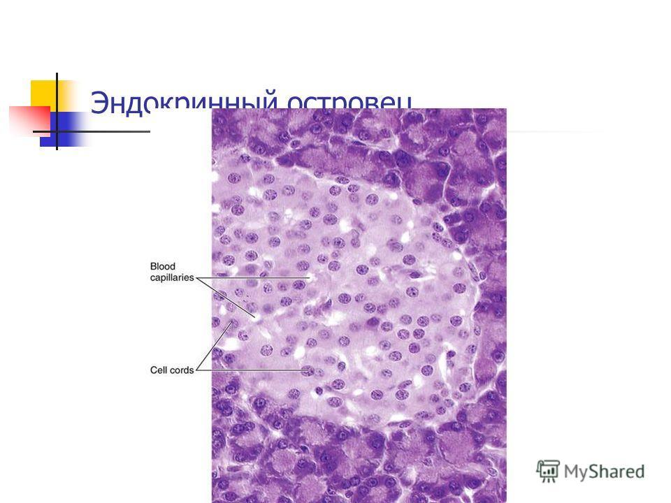 Эндокринный островец