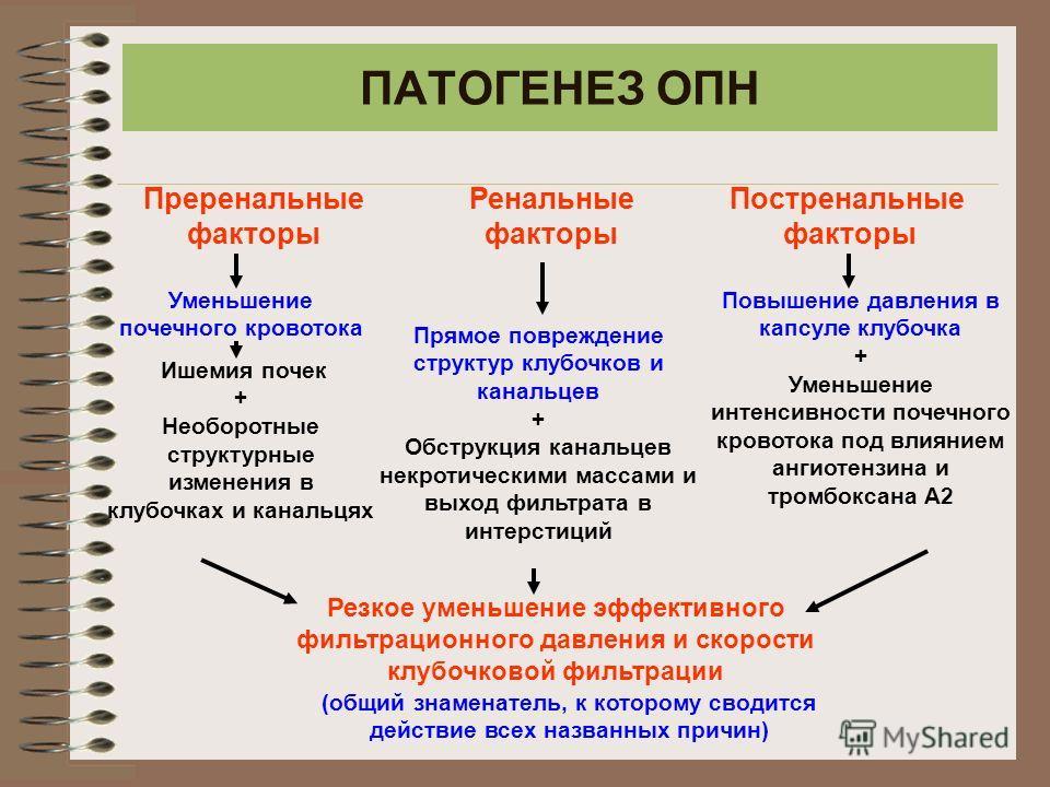Ренальный