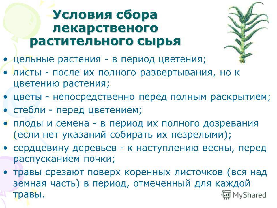 Условия сбора лекарственого растительного сырья цельные растения - в период цветения; листы - после их полного развертывания, но к цветению растения; цветы - непосредственно перед полным раскрытием; стебли - перед цветением; плоды и семена - в период