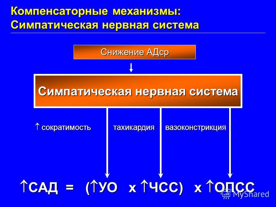 САД = ( УО x ЧСС) x ОПСС САД = ( УО x ЧСС) x ОПСС Симпатическая нервная система сократимость сократимостьтахикардиявазоконстрикция Компенсаторные механизмы: Симпатическая нервная система Снижение АДср
