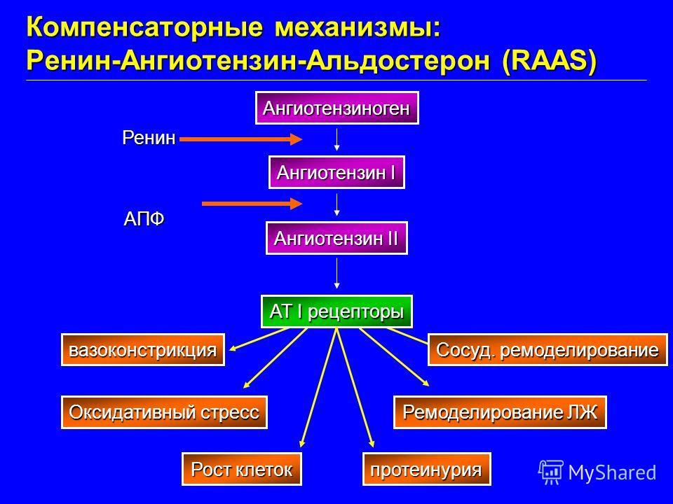 вазоконстрикция Оксидативный стресс Рост клеток протеинурия Ремоделирование ЛЖ Сосуд. ремоделирование Ангиотензиноген Ангиотензин I Ангиотензин II AT I рецепторы Ренин АПФ Компенсаторные механизмы: Ренин-Ангиотензин-Альдостерон (RAAS)