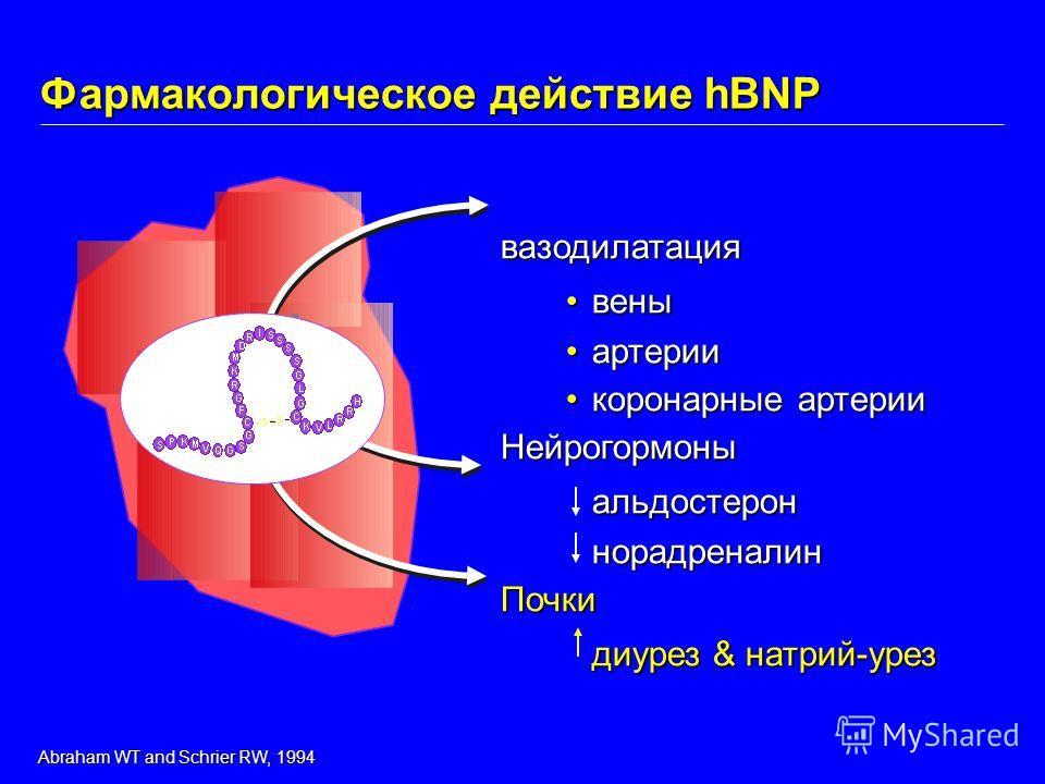 вазодилатация венывены артерииартерии коронарные артериикоронарные артерииНейрогормоныальдостероннорадреналин Почки диурез & натрий-урез Фармакологическое действие hBNP Abraham WT and Schrier RW, 1994