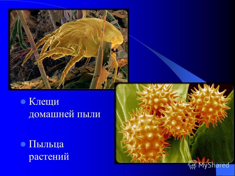 Клещи домашней пыли Пыльца растений