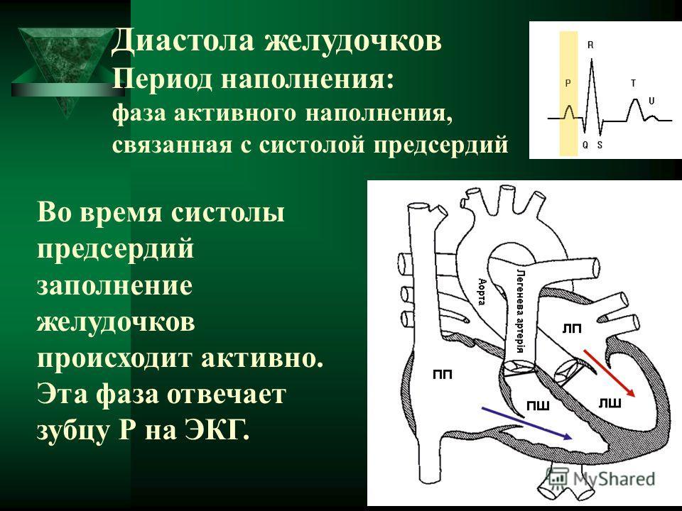 Диастола желудочков Период наполнения: фаза активного наполнения, связанная с систолой предсердий Во время систолы предсердий заполнение желудочков происходит активно. Эта фаза отвечает зубцу Р на ЭКГ.