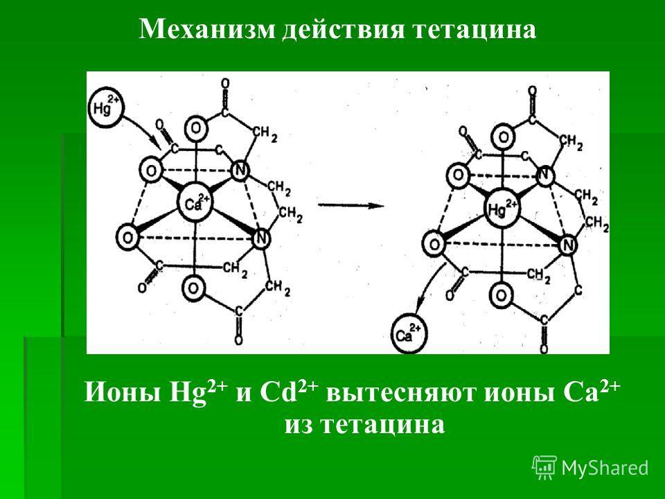 Механизм действия тетацина Ионы Hg 2+ и Cd 2+ вытесняют ионы Ca 2+ из тетацина