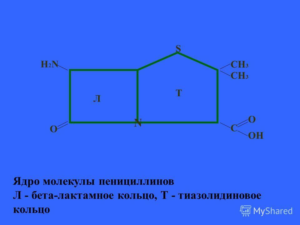 Ядро молекулы пенициллинов Л - бета-лактамное кольцо, Т - тиазолидиновое кольцо N T Л S C O OH CH 3 O H2NH2N