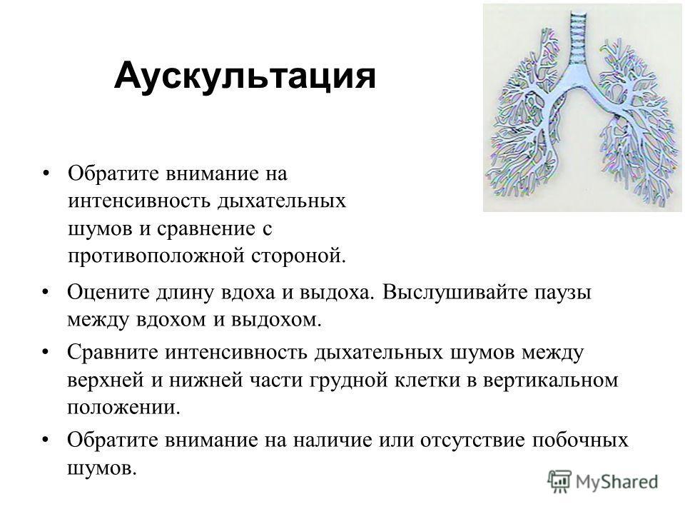 Оцените длину вдоха и выдоха. Выслушивайте паузы между вдохом и выдохом. Сравните интенсивность дыхательных шумов между верхней и нижней части грудной клетки в вертикальном положении. Обратите внимание на наличие или отсутствие побочных шумов. Аускул