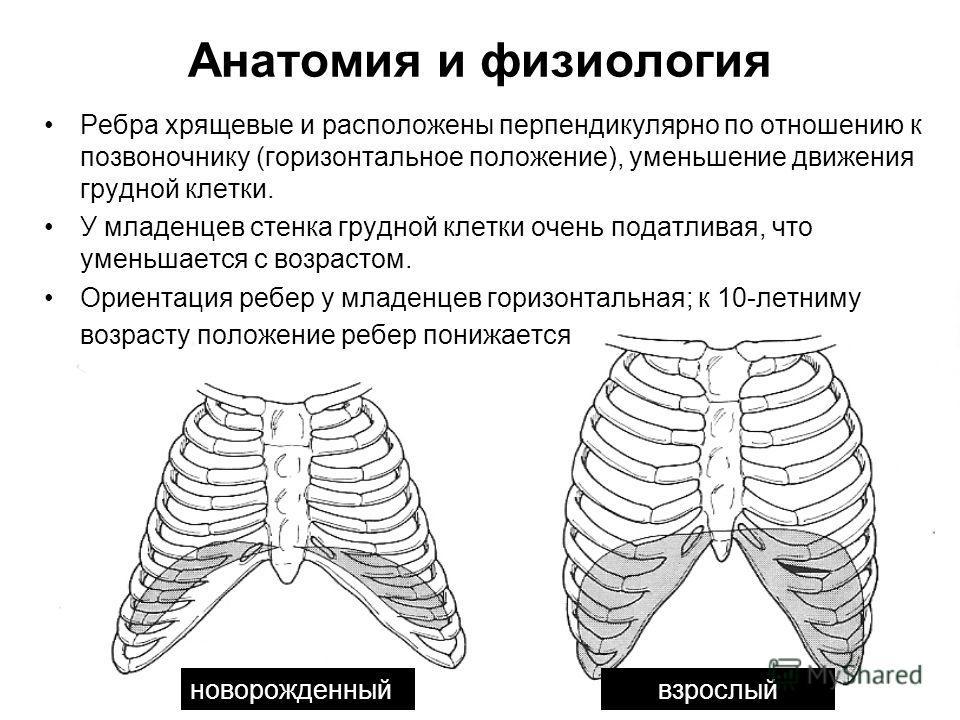 Анатомия и физиология Ребра хрящевые и расположены перпендикулярно по отношению к позвоночнику (горизонтальное положение), уменьшение движения грудной клетки. У младенцев стенка грудной клетки очень податливая, что уменьшается с возрастом. Ориентация