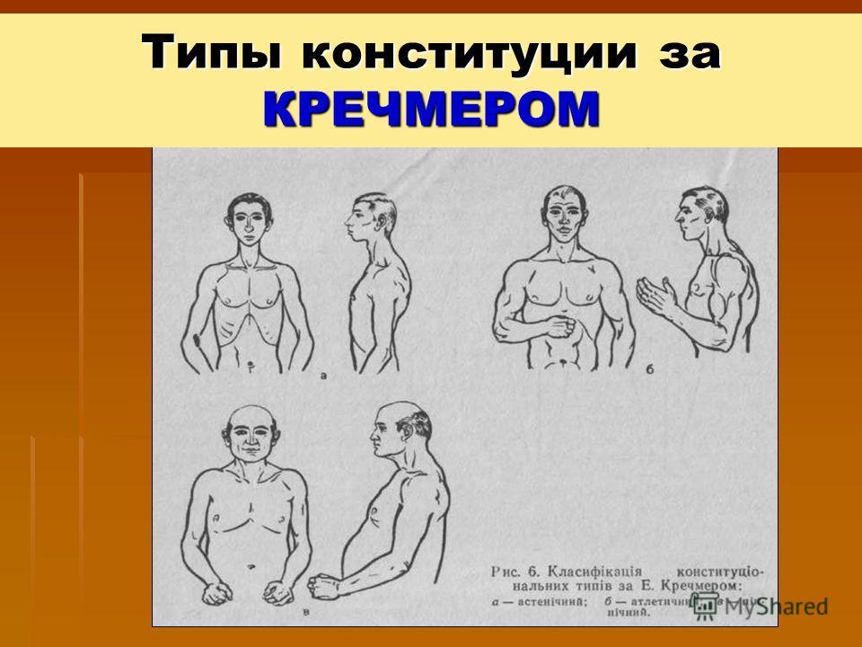 Типы конституции за КРЕЧМЕРОМ