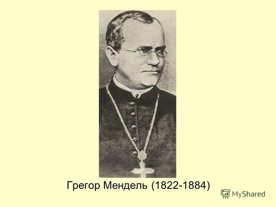 Грегор Мендель (1822-1884)