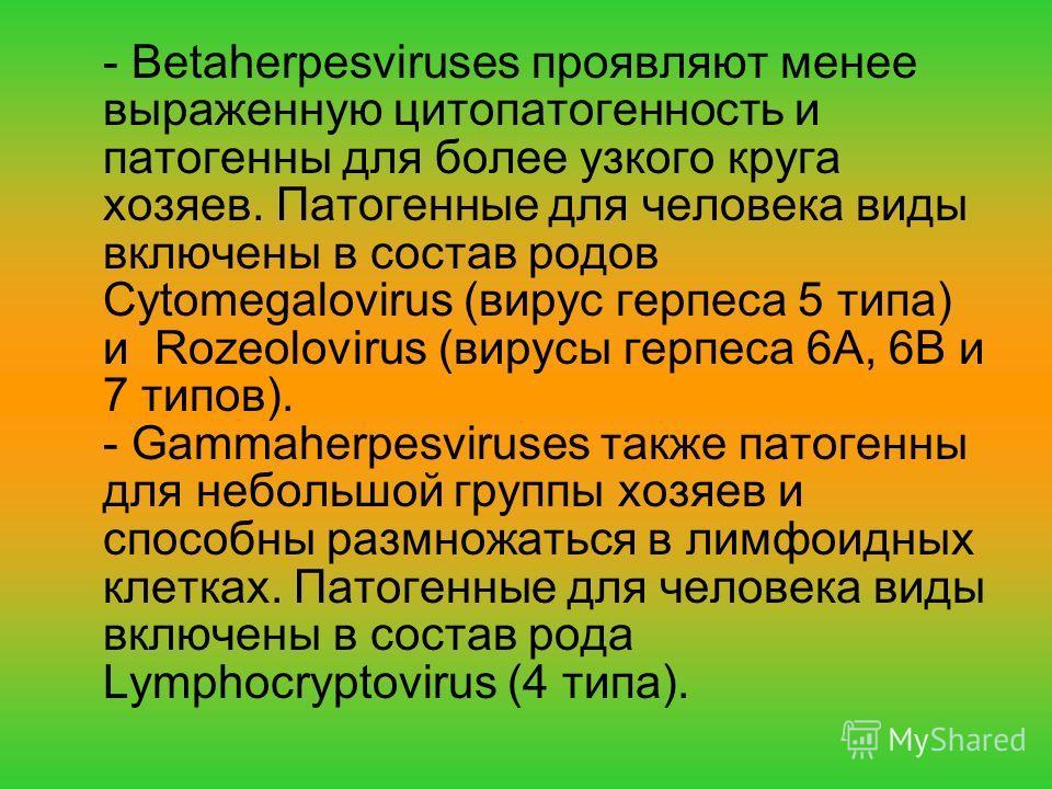 - Betaherpesviruses проявляют менее выраженную цитопатогенность и патогенны для более узкого круга хозяев. Патогенные для человека виды включены в состав родов Cytomegalovirus (вирус герпеса 5 типа) и Rozeolovirus (вирусы герпеса 6А, 6В и 7 типов). -