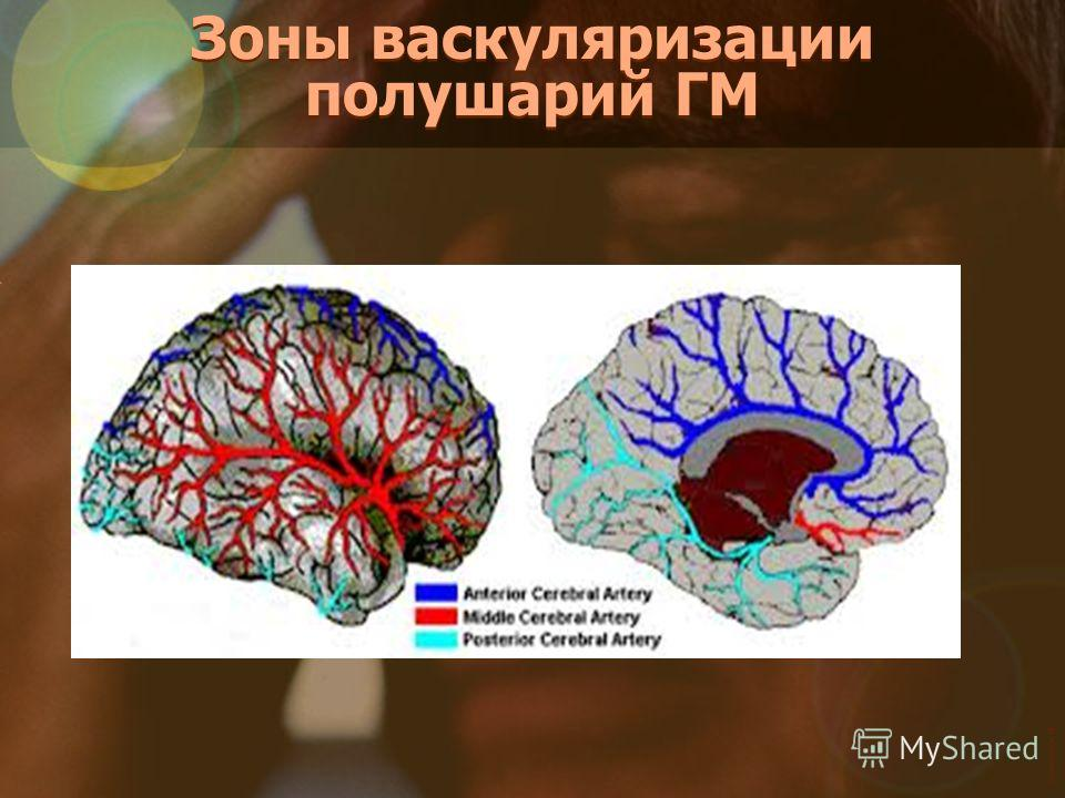 Vasilishin W Зоны васкуляризации полушарий ГМ