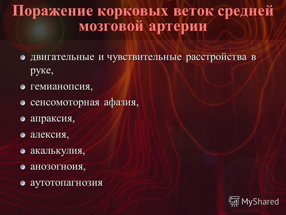 Vasilishin W Поражение корковых веток средней мозговой артерии двигательные и чувствительные расстройства в руке, гемианопсия, сенсомоторная афазия, апраксия,алексия,акалькулия,анозогноия,аутотопагнозия