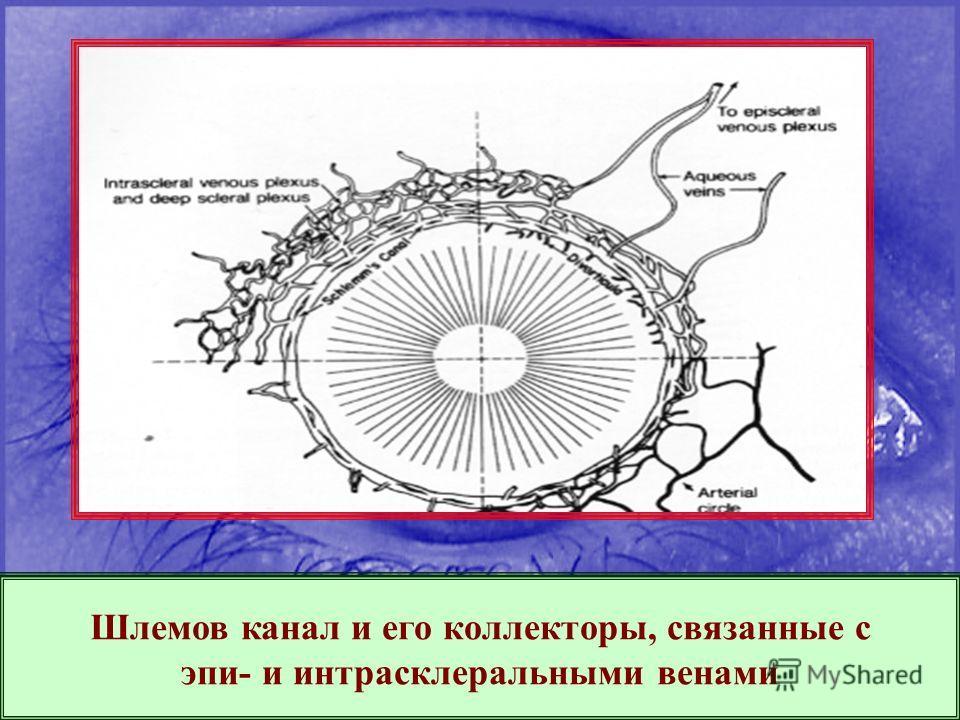 Шлемов канал и его коллекторы, связанные с эпи- и интрасклеральными венами