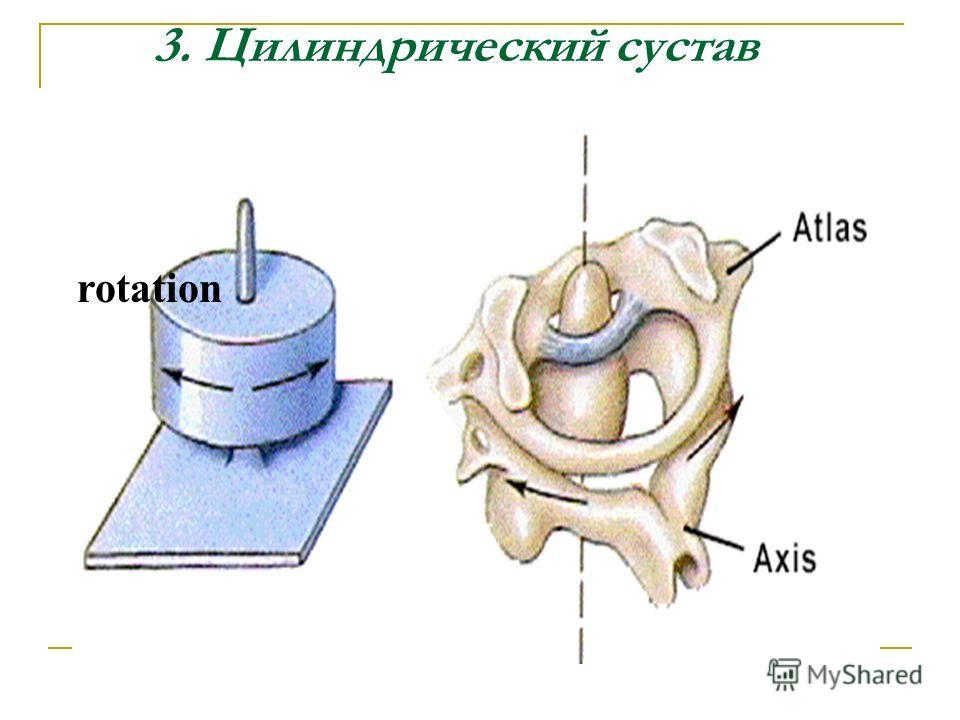 3. Цилиндрический сустав rotation