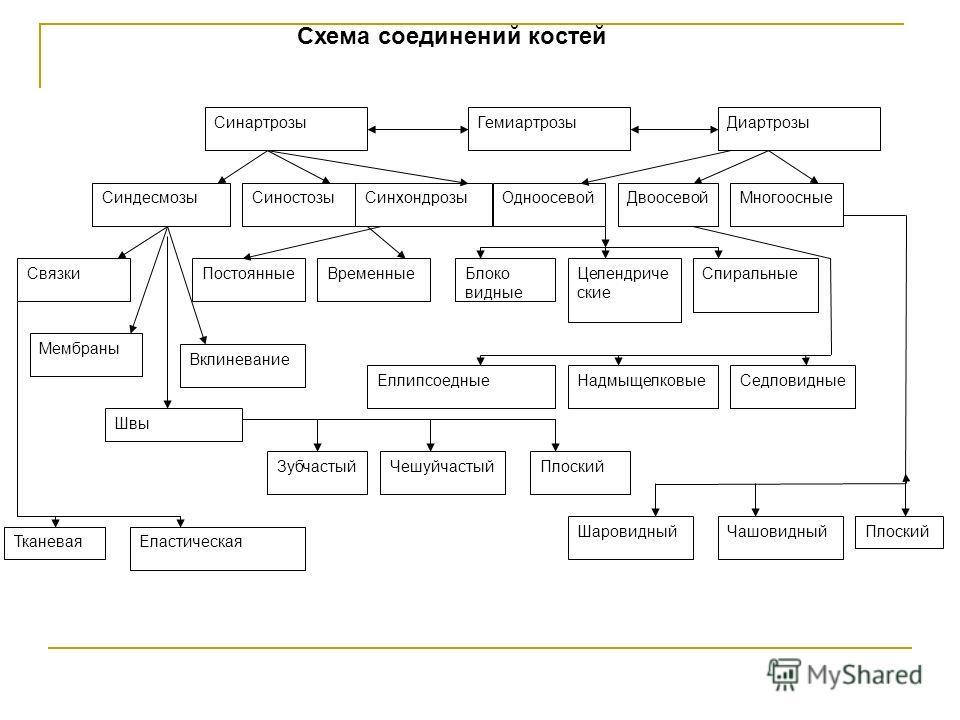 Схема соединений костей