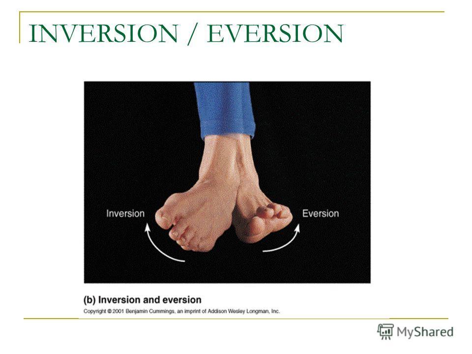 INVERSION / EVERSION