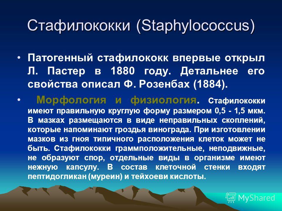 Стафилококки (Staphylococcus) Патогенный стафилококк впервые открыл Л. Пастер в 1880 году. Детальнее его свойства описал Ф. Розенбах (1884). Морфология и физиология. Стафилококки имеют правильную круглую форму размером 0,5 - 1,5 мкм. В мазках размеща