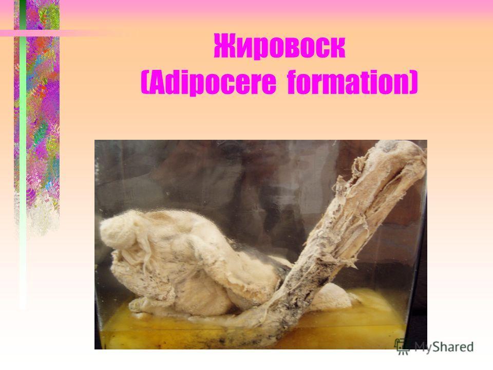 Жировоск (Adipocere formation)