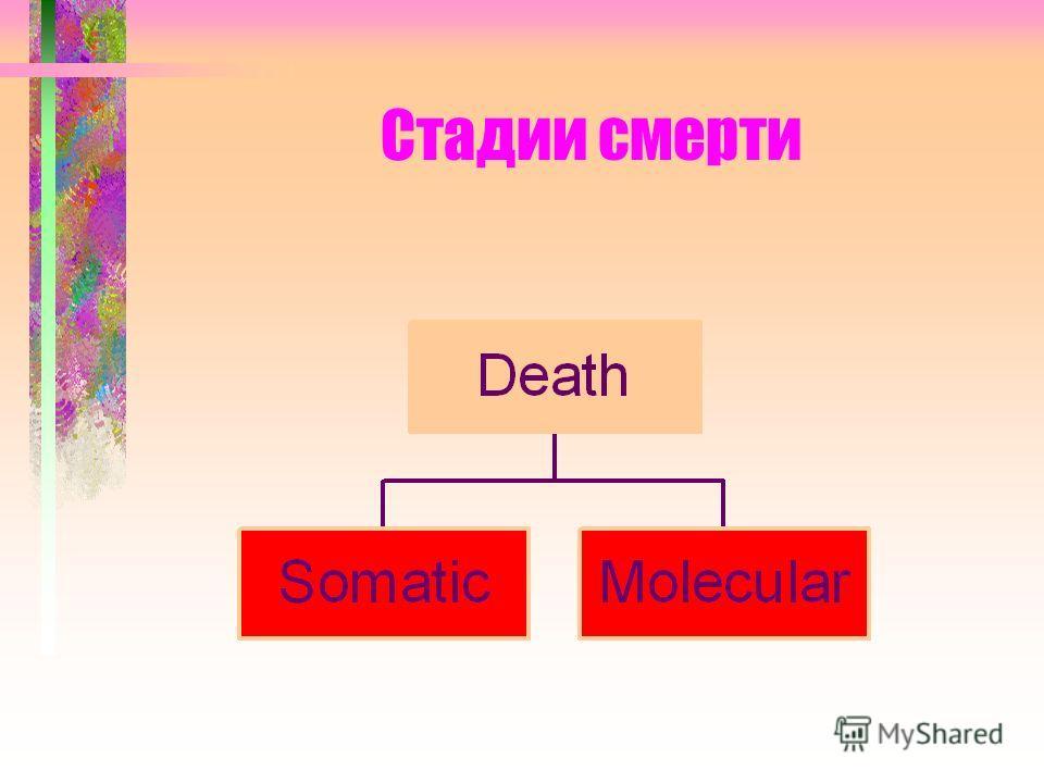 Стадии смерти