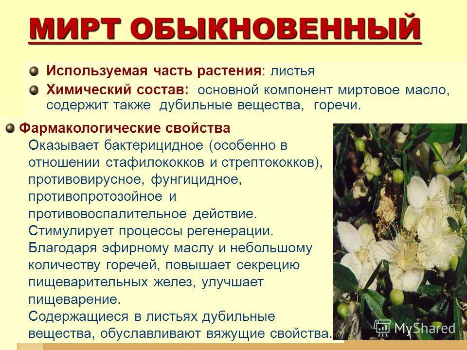 МИРТ ОБЫКНОВЕННЫЙ Используемая часть растения: листья Химический состав: основной компонент миртовое масло, содержит также дубильные вещества, горечи. Фармакологические свойства Оказывает бактерицидное (особенно в отношении стафилококков и стрептокок