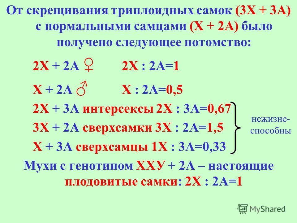 От скрещивания триплоидных самок (3Х + 3А) с нормальными самцами (Х + 2А) было получено следующее потомство: 2Х + 2А 2Х : 2А=1 Х + 2А Х : 2А=0,5 2Х + 3А интерсексы 2Х : 3А=0,67 3Х + 2А сверхсамки 3Х : 2А=1,5 Х + 3А сверхсамцы 1Х : 3А=0,33 Мухи с гено
