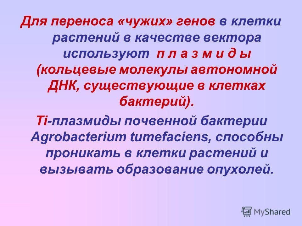 Для переноса «чужих» генов в клетки растений в качестве вектора используют п л а з м и д ы (кольцевые молекулы автономной ДНК, существующие в клетках бактерий). Ti-плазмиды почвенной бактерии Agrobacterium tumefaciens, способны проникать в клетки рас