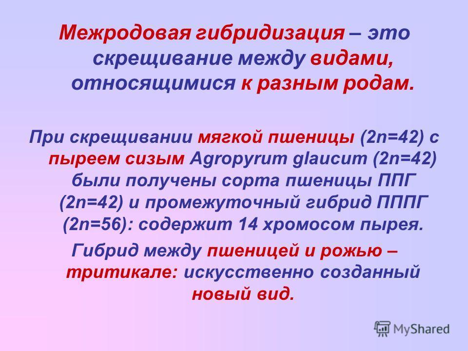 Межродовая гибридизация – это скрещивание между видами, относящимися к разным родам. При скрещивании мягкой пшеницы (2n=42) с пыреем сизым Agropyrum glaucum (2n=42) были получены сорта пшеницы ППГ (2n=42) и промежуточный гибрид ПППГ (2n=56): содержит