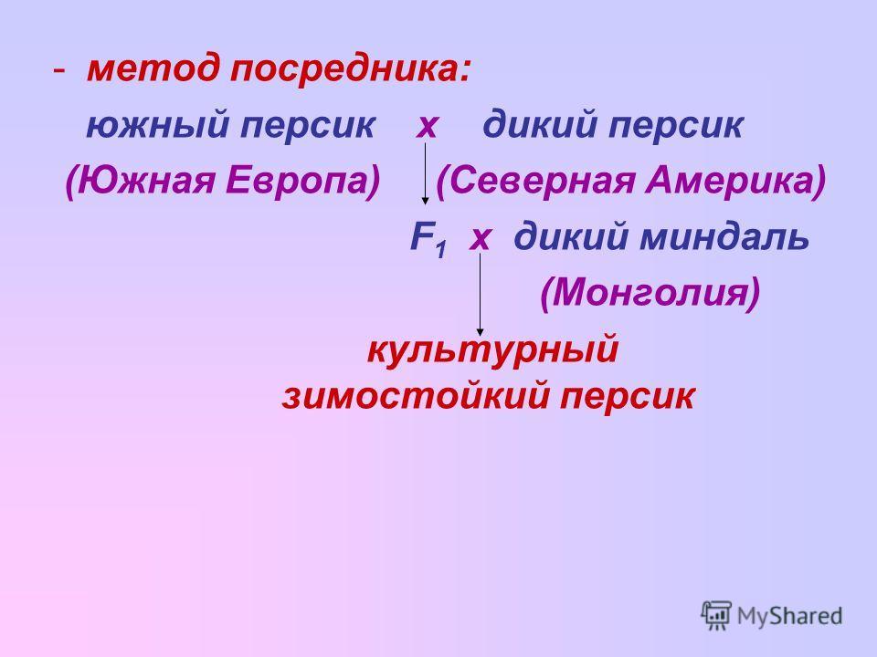 -метод посредника: южный персик х дикий персик (Южная Европа) (Северная Америка) F 1 х дикий миндаль (Монголия) культурный зимостойкий персик